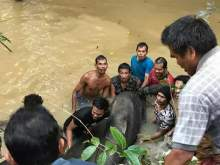 В Таиланде жители деревни спасли гигантского сома