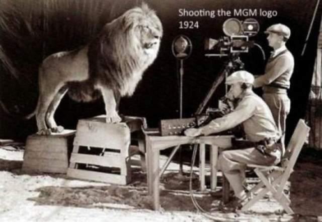 Съемка льва для логотипа Metro-Goldwyn-Mayer