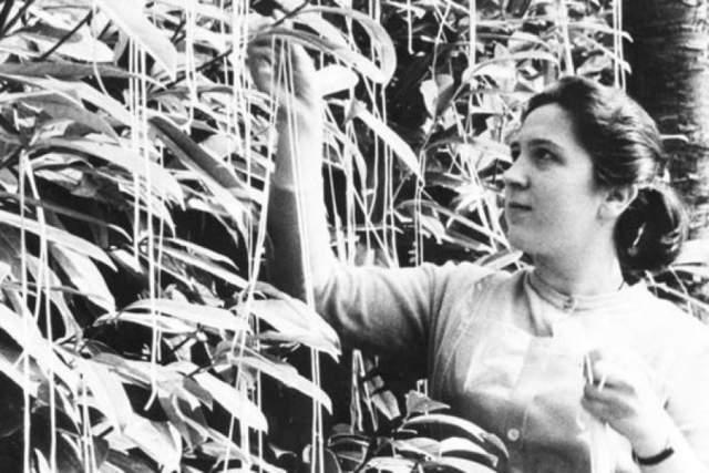 Журналисты сообщили, что небывалый урожай удалось получить благодаря мягкой зиме и уничтожению жука-долгоносика.