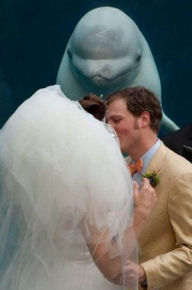 Объявляю вас мужем и женой!