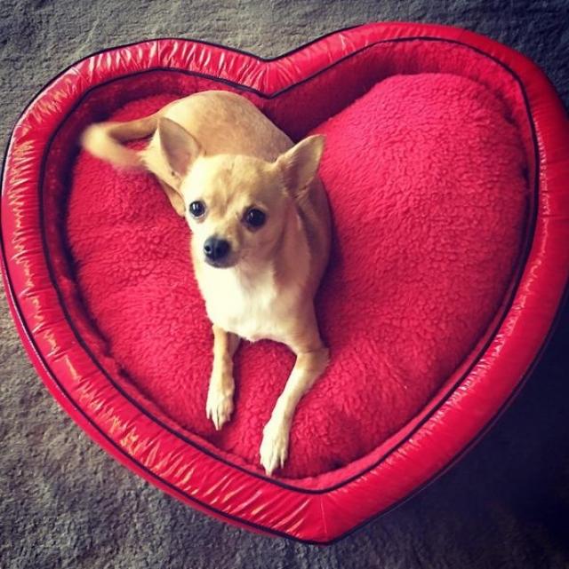 А ее собачка Тинкербелл зарабатывает огромные деньги, являясь лицом VIP-бренда собачьей одежды Little Lily, а также рекламирует еще один не менее дорогой бренд одежды для животных, который так и назвали Paris Hilton Pets.