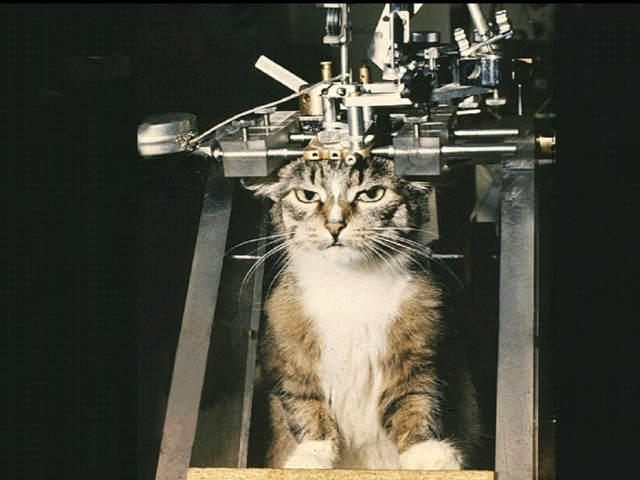 Кошка номер одиннадцать. Нейрофизиолог Иван Пигарев при участии животного с необычным именем предложил новый вариант объяснения функции сна.