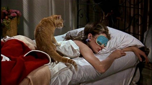 """Кот Оранджи. Пожалуй, вспоминая культовый классический фильм """"Завтрак у Тиффани"""", многие вспомнят именно домашнее животное главной героини."""