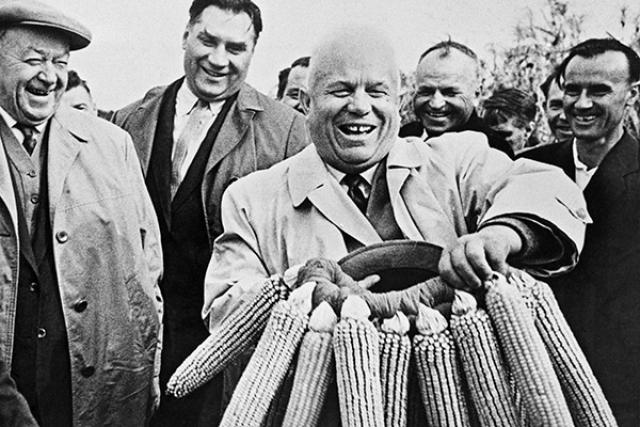 В США Хрущев увидел упитанных коров, которых кормили кукурузой, и конечно же решил сделать тоже самое и в СССР, приказав засеять большинство полей кукурузой в ущерб пшенице и ржи.