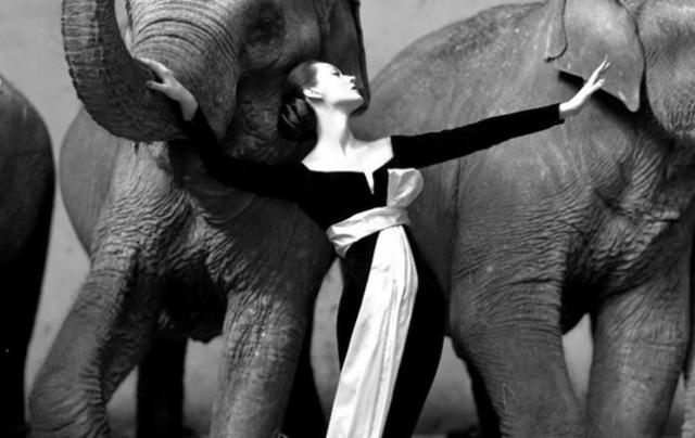 """Довима и слоны"" - $1 151 976."