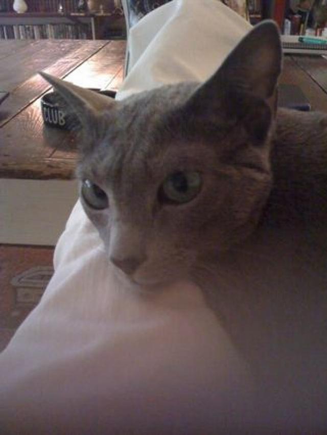 """Вупи впервые увидела котенка породы """"русская голубая"""" во время съемок своего шоу View. В эфире прозвучала душераздирающая история животного, сердце Вупи дрогнуло и она решила, что сама подарит Винни новый дом."""