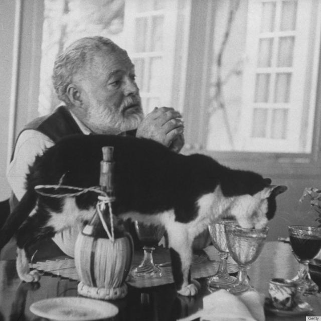 В наше время в доме-музее писателя живут полсотни любимых животных Хемингуэя.