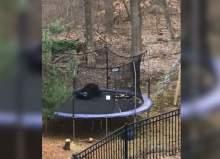 В США сняли на видео, как маленький медведь прыгает на детском батуте