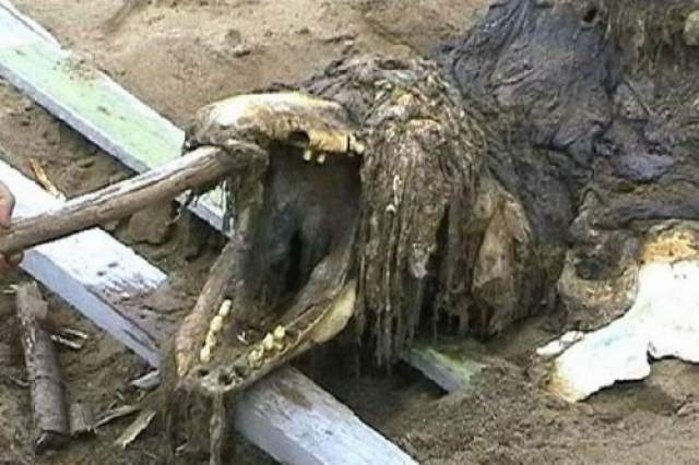 Сахалинский монстр Останки неизвестного существ найдены военнослужащими Российской армии на побережье острова Сахалин в сннтябре 2006-го года, по строению черепа монстр несколько напоминает крокодила, но остальной скелет совершенно не похож ни на одно известное науке пресмыкающееся. К рыбам его отнести также никак нельзя, и местные жители, которым солдаты показали находку, не смогли опознать в ней какое-либо существо, живущее в этих водах.