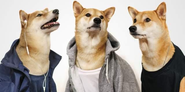 Пес Бодхи. Питомец породы шиба-ину принадлежит дизайнеру Йен Ким и ее бойфренду Дэвиду Фангу из Нью-Йорка, именно они впервые и нарядили пса как стильного мужчину ради шутки.