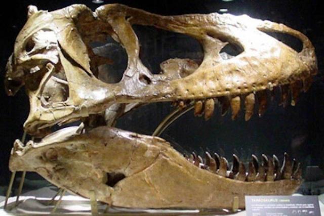 Также за Кейджем числится приобретение за $276 000 черепа динозавра, жившего 67 миллионов лет назад.