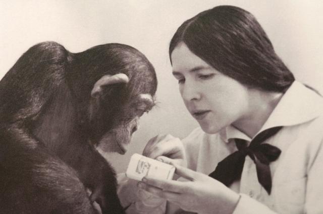 В годы войны не удавалось обеспечить шимпанзе нормальной пищей, Иони умер в 1916 году от инфекции.