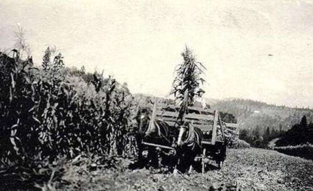 НЛО над полями в США, 1920 годы Фотография сделана где-то в США в начале 1920-х голов - вот и все, что о ней известно наверняка. Судя по холмистой местности, ее могли сделать на западе или востоке Атлантического побережья.