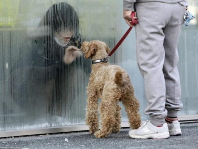Девушка, находящаяся во временной изоляции для выявления и очистки от радиации, смотрит на свою собаку через стекло. Япония, 2011 год.