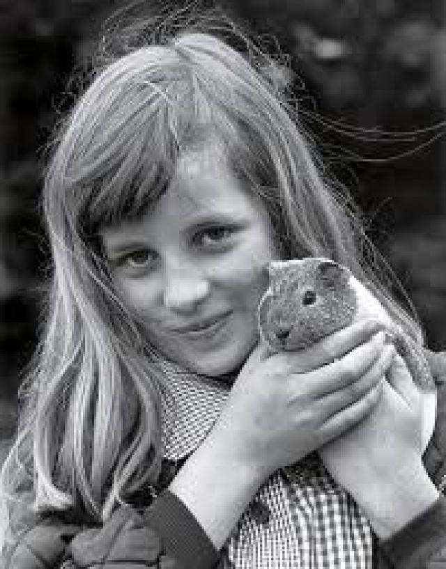 """Милая и застенчивая девушка из благородной семьи получила прекрасное образование в закрытой частной школе """"Новая Англия""""."""