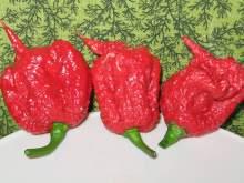 Американец едва не умер после того, как съел самый острый перец в мире