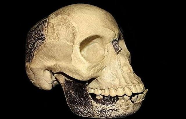 Пилтдаунский человек Чарльза Доусона . Доусон, любитель археологических раскопок, объявил в 1912 году о сенсационной находке – недостающем звене в эволюционной цепочке от обезьяны к человеку.