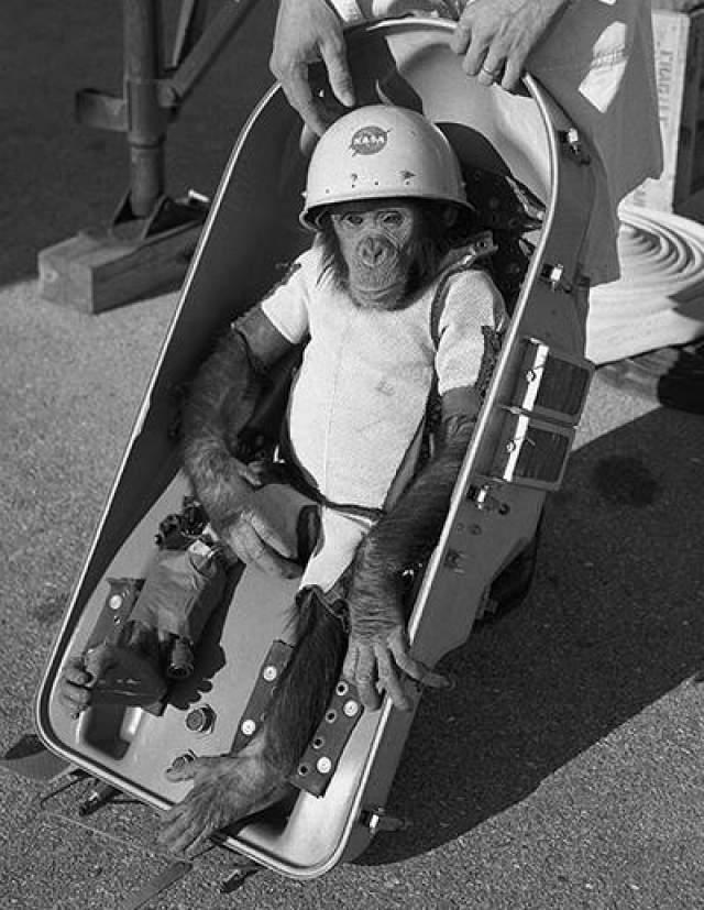 Обезьяна Гордо - первое животное, запущенное во внеземное пространство американцами 13 декабря 1958 года, - стала первой обезьяной, побывавшей в космосе.