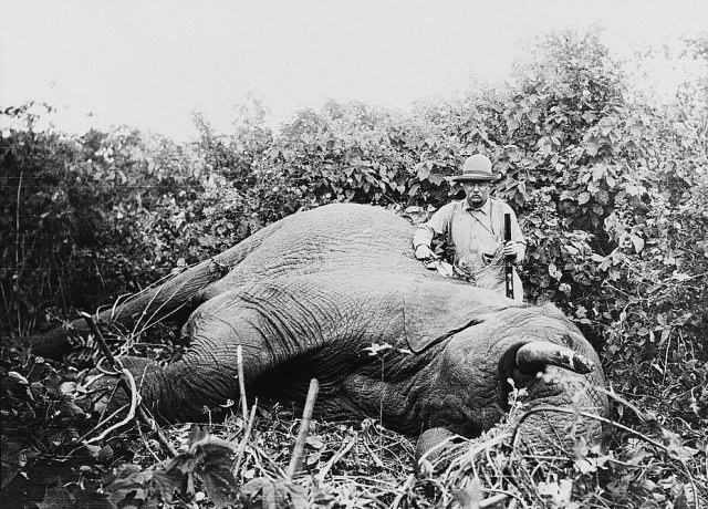 Тедди часто принимал гостей в трофейной комнате, и в старости любил похваляться убитыми им чучелами животных и их шкурами.