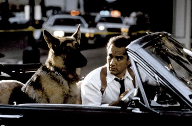 """Овчарка Котон. Настоящая полицейская ищейка снялась в фильме """"К-9: собачья работа""""."""