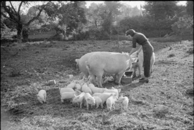 - 12 октября 1950 года в Беннингтонском треугольнике пропал восьмилетний Пол Джепсон. Его мать держала ферму. В тот день она оставила сына возле свинарника, а сама ушла кормить животных. За те несколько минут, что ее не было рядом, Пол загадочным образом успел исчезнуть без следа.