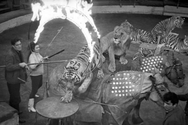 После похорон знаменитость легла на 1,5 года в психиатрическую клинику. Вернувшись на цирковую арену, она всегда рядом с собой держала психиатра с медикаментами. А затем в Казани разбился тигр, с которым она раскачивалась на качелях под куполом цирка.