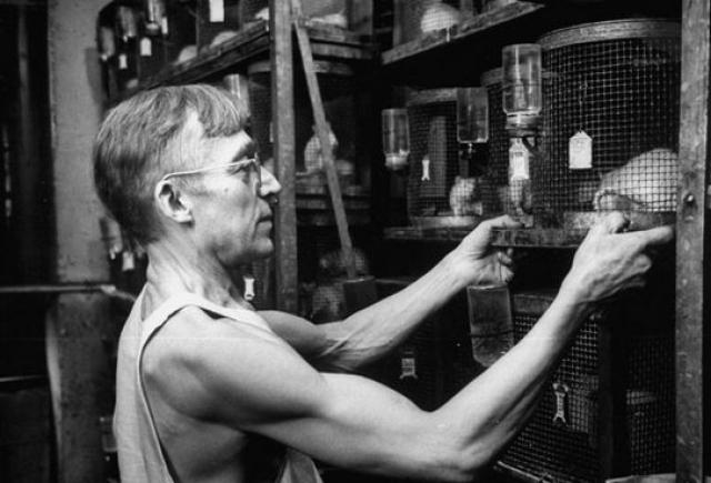 Фредрик Хелзел. Будучи исследователем в Чикагском университете, Хелзел решил проверить, как быстро несъедобные продукты: кукурузные початки, пробки, перья, опилки, асбест, целлюлозу и стволы бананов, а также хирургическая вата, пройдут сквозь его пищеварительную систему.