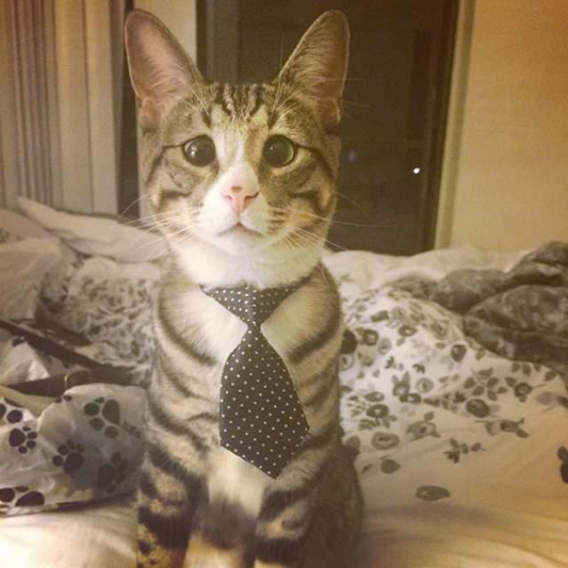 Котик оказался очень добрым, ласковым и отзывчивым, при этом любит играть и хорошо ладит с другими животными. Знаменитым Бум стал после того ,как его фото были опубликованы в популярном блоге Love Meow.