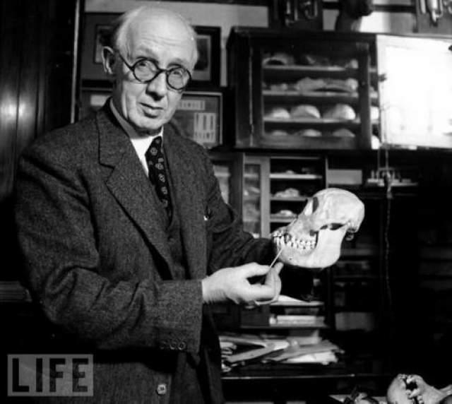 И только в 1949 году выяснилось, что Пилтдаунский человек- ловкая мистификация. Части черепа принадлежали человеку и орангутангу, а каменным орудиям было всего 2-3 тыс. лет. Весь комплекс находок был искусственно окрашен специальным красителем в тона, соответствующие цвету жилистого гравия, а зубы на челюсти были специально подпилены.