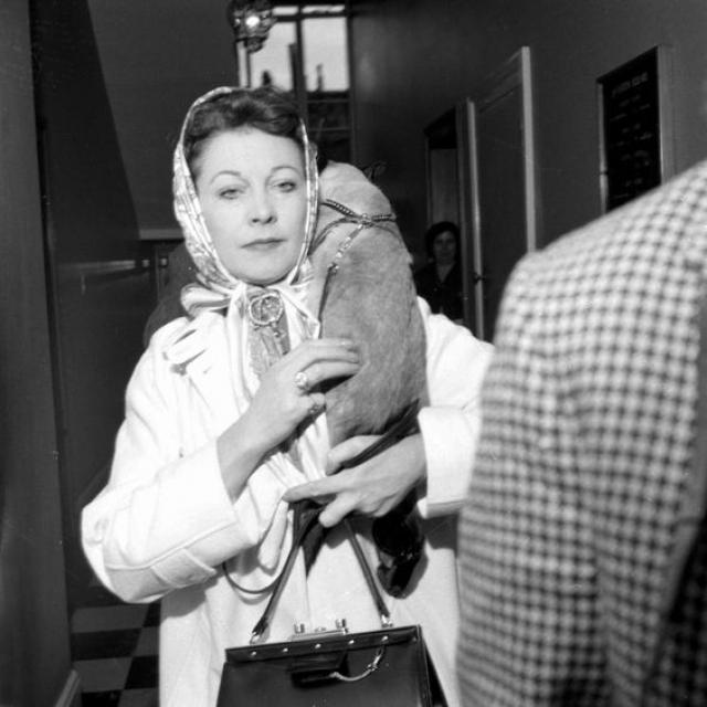 В последние годы жизни котом Вивьен был Пу Джонс. Очевидцы рассказывают, что актриса брала его с собой в театр и кот развил способность спать во время представлений, но просыпаться как раз к приходу хозяйки в гримерку.