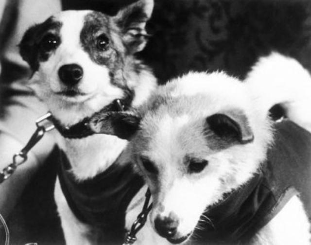 Позже стало известно, что собаку Лайку отправили в космос, заранее зная, что она погибнет. Существует легенда, что после этого в ООН пришло письмо от группы женщин из штата Миссисипи, которые требовали осудить бесчеловечное отношение к собакам в СССР и выдвинули предложение использовать для этого негритят.