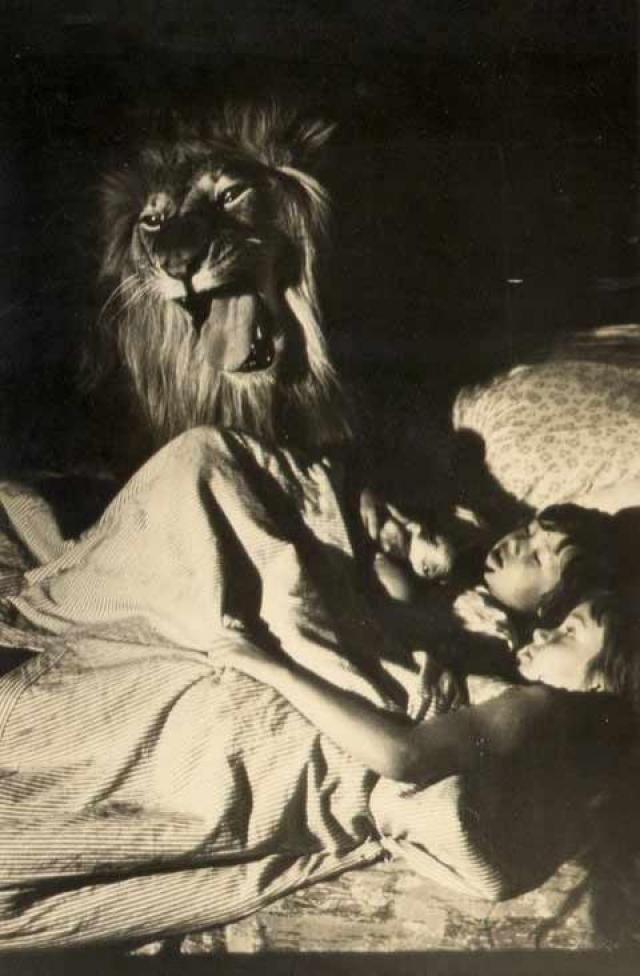 Дальнейшая судьба Кинга сложилась трагически. Хищника привезли на дачу для съемок в следующем фильме.