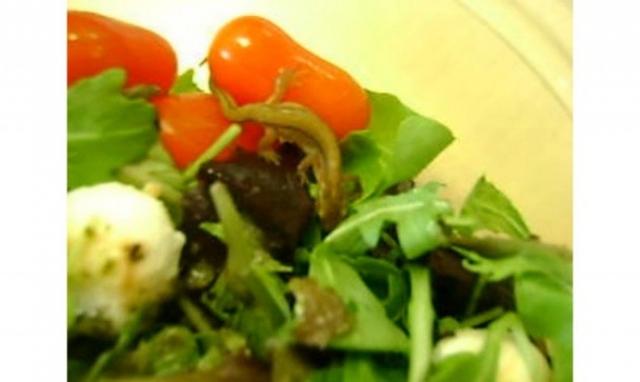 Кому-то повезло больше и тритон в салате оказался живым.