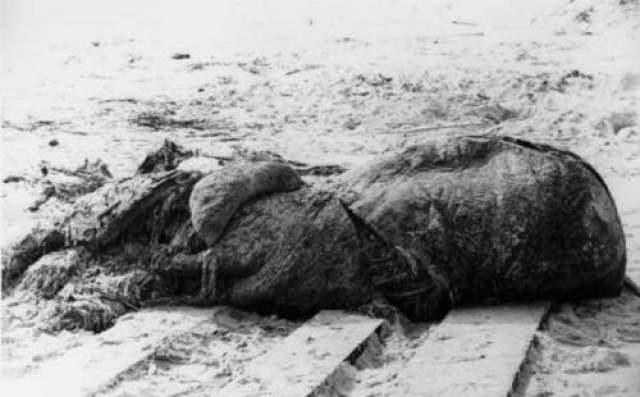 """Большой и загадочный труп был выброшен на берег в Сент-Августине, Флорида, в 1896 году. Предполагаемый вид получил латинское название """"гигантский осминог"""". Это название противоречит правилам Международного кодекса зоологической номенклатуры и не признаются им, впрочем, как и сам факут существования гигантского осьминога. Гигантский осьминог или спрут - гипотетическое морское существо, подобное кракену. Сведения о нем получены в основном из легенд. Английский ученый по имени Веррилл, считал, что останки морского беспозвоночного , выброшенного на побережье у Санкт-Августина, являются телом """"настоящего осьминога колоссальных размеров"""", и называют его осьминогом гигантским. Статья об этом появилась в Американском научном журнале."""