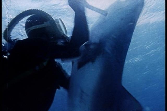 Во время съемок подводных сцен, акуле удалось прорваться через защитную сетку, отделявшую Марко от нее, и до смерти искусать каскадера.
