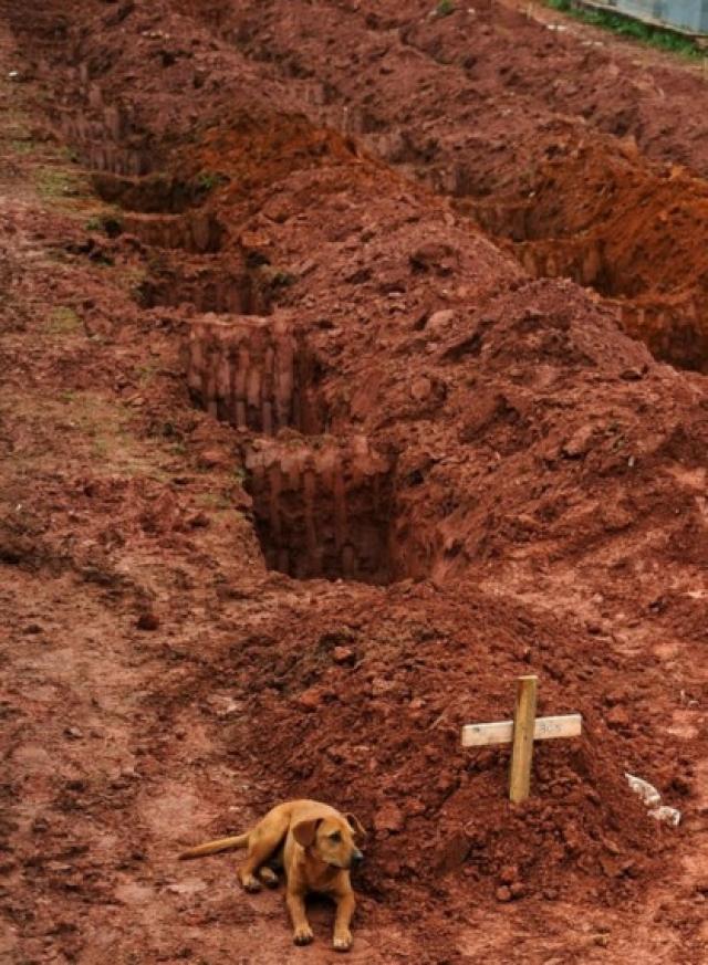 """Собака по имени """"Leao"""" сидящая в течение двух дней у могилы хозяина, который погиб в жутких оползнях. Рио-де-Жанейро, 15 января 2011год."""