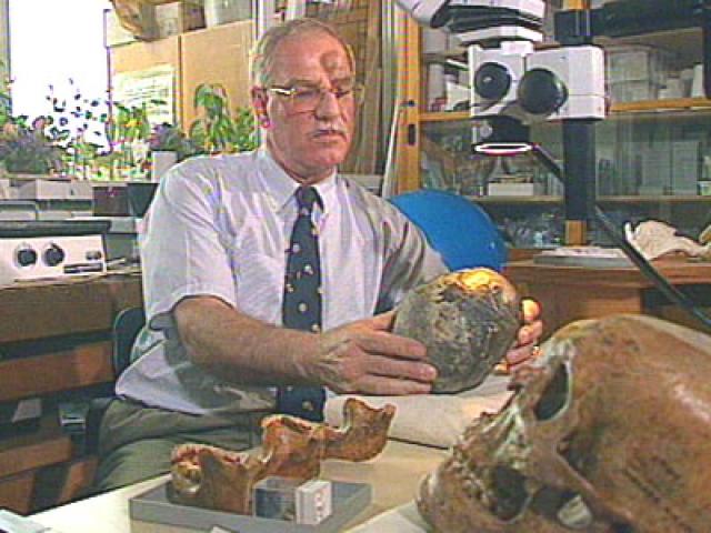 Потерянное звено. Немецкий палеонтолог Райнер Протш фон Зайтен якобы обнаружил останки промежуточного звена эволюции.
