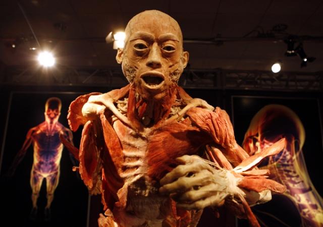 """Выставка """"Мир тела"""". Экспозиция была открыта несколько лет назад в Берлине и вызвала немало скандальных отзывов."""