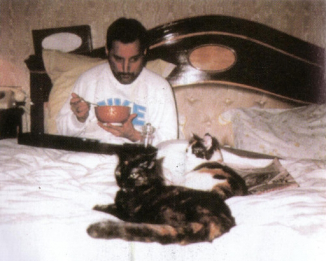 Меркьюри любил всех своих четвероногих питомцев, считал их самыми настоящими и преданными друзьями. Однако двух котят, которых ему подарили на Рождество в 1987 году, особенно черепаховую кошечку, он практически боготворил.