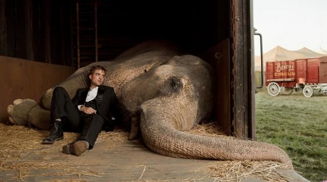 """Слон Таи. Еще одна звезда кинематографа. В ее фильмографии картины """"Больше чем жизнь"""", """"Джордж из джунглей"""", """"Ярмарка тщеславия"""" и относительно недавняя мелодрама """"Воды слонам""""."""