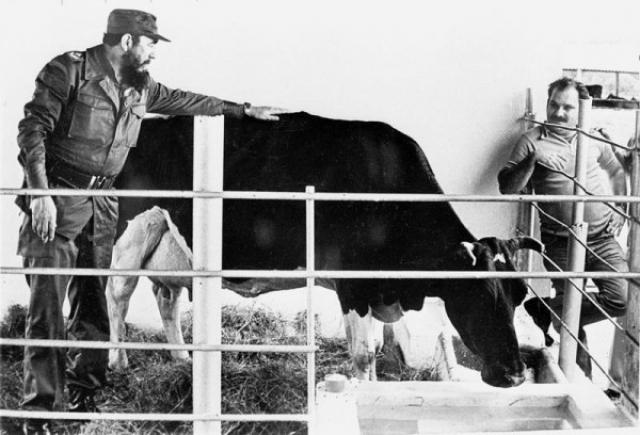 А однажды сказал, что в состоянии признать в лицо всех коров, которыми владел. После того, как кубинский министр связи Энрике Олтуски отвечал за стадо его коров, Олтуски перевёз некоторую часть крупного рогатого скота в другое место, но Кастро при осмотре сразу заметил, что они пропали без вести.