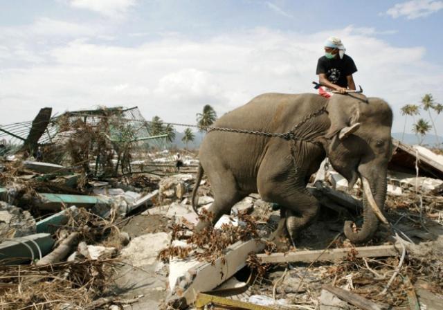 Британский турист, не пожелавший раскрывать своего имени, рассказывал, что 26 декабря на пляже острова Пхукет он видел, как слон спасает маленьких детей. По его словам, животное хоботом подсадило малышей себе на спину и вынесло из бурлящей воды.