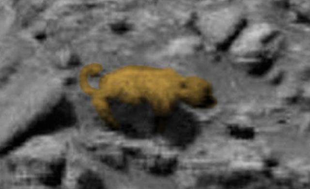 Главный редактор UFO Sightings Daily Скотт С Уоринг убежден, что найденное живое существо с шерстью и хвостом — реально.