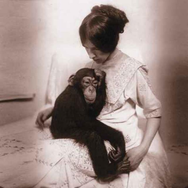 Обезьяна Иони. В 1913 году Надежда Ладыгина-Котс приобрела полуторагодовалого шимпанзе по кличке Иони. Почти четыре года он прожил в ее квартире фактически на правах сына.