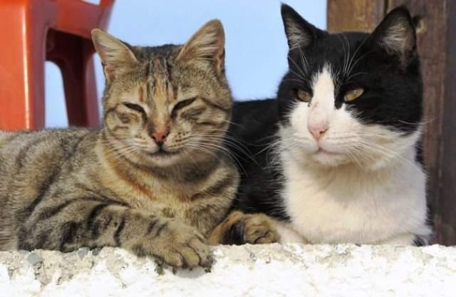 Лондонцы истребляли кошек Во время Великой чумы в Лондоне в 1665 году люди заподозрили кошек в том, что именно они распространяют эту болезнь, поэтому они и начали убивать их...