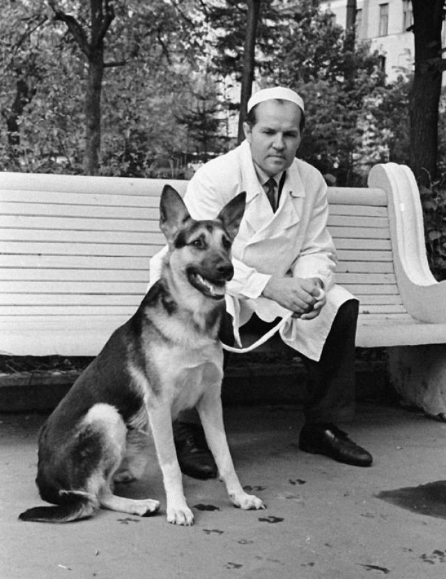 Овчарка Гришка. Собака, прожившая с двумя сердцами почти пять месяцев, причем, умершая от пьяной руки слесаря, а не в результате операции.