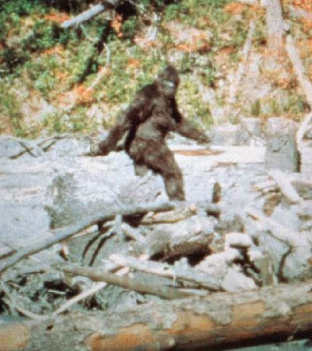 Осенью в 1967 году американского ученого Роджера Паттерсена в ущелье в Северной Калифорнии поджидала удача. Этот фотограф стал первым, кто сумел запечатлеть снежного человека на кинокамеру, приблизившись к бигфуту на расстояние 40 метров.