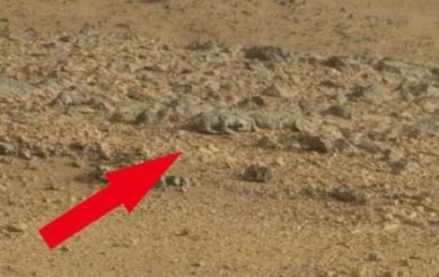 """Тогда же был сделан и снимок марсианской """"крысы""""."""
