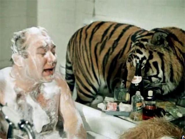 """Тигр Пурш. Хищник из фильма """"Полосатый рейс"""" был любимчиком известной дрессировщицы Маргариты Назаровой, которая его всячески баловала."""