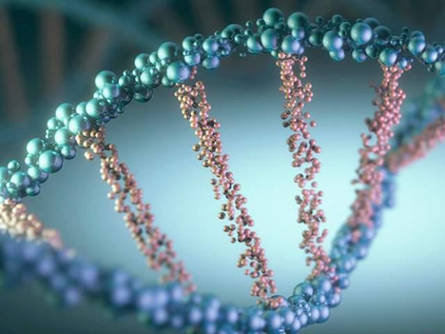 Длина ДНК с учетом всех клеток тела составляет 16 млрд км, что равняется расстоянию от Земли до Плутона и обратно.